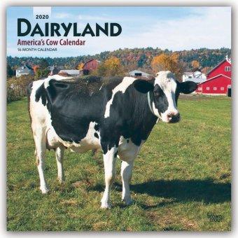 Dairyland - America's Cow Calendar - Molkereiland - Amerikas Kuh-Kalender 2020 - 18-Monatskalender