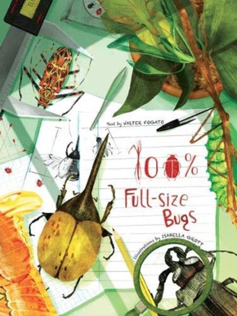 100% Full Size Bugs
